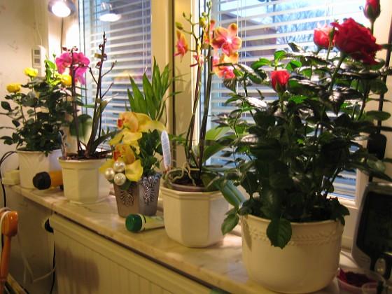 Blommor från ICA :-) Mellandagsrean är inget för mej. Däremot har jag fyndat lite på ICA Kvantum i Nybro. 2008-12-29 IMG_0001 Granudden Färjestaden Öland