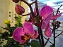 Orkide Den här färgen var ännu häftigare! 2008-12-29 IMG_0037