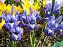 Iris  2009-04-05 037