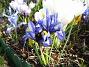 Iris  2009-04-05 039