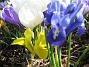Iris  2009-04-05 050