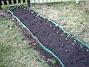Solrosor  2009-04-11 102