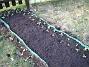 Solrosor  2009-04-11 137