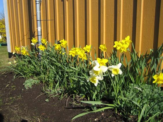 2009-04-25 023 Granudden Färjestaden Öland