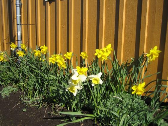 2009-04-25 024 Granudden Färjestaden Öland