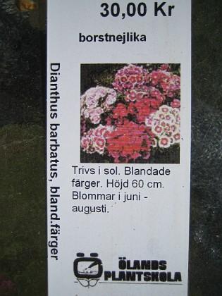 Borstnejlika Dianthus barbatus, blandade färger&nbsp 2009-05-02 004 Granudden Färjestaden Öland