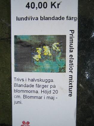 Lundviva, blandade färger Primula elatior mixture&nbsp 2009-05-02 007 Granudden Färjestaden Öland