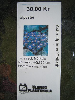 Alpaster { Aster Alpinus