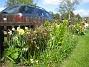 Granudden Pionerna har vuxit rejält. 2009-05-09 005
