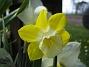 Narciss  2009-05-09 009