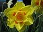 Narciss  2009-05-09 026