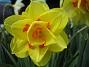 Narciss  2009-05-09 027