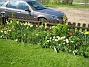Staket  2009-05-09 067
