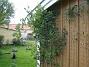 Kaprifol  2009-05-09 088