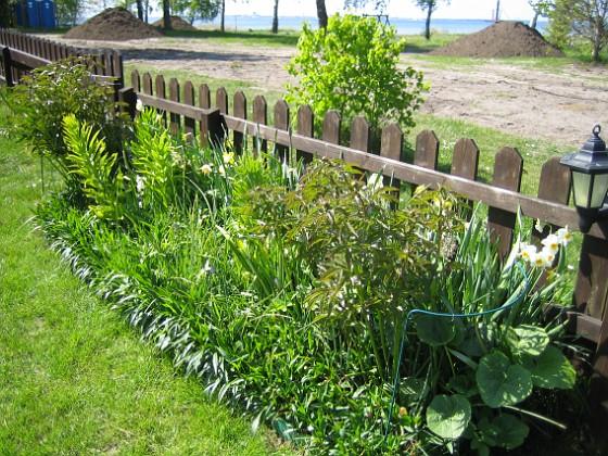 Granudden Mina Pioner börjar växa till sig riktigt rejält.&nbsp 2009-05-17 005 Granudden Färjestaden Öland