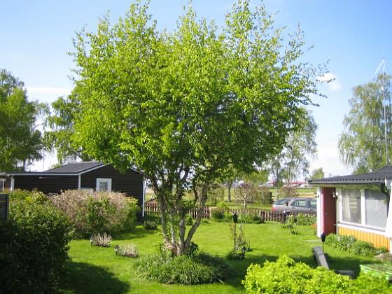 Granudden &nbsp 2009-05-17 082 Granudden Färjestaden Öland