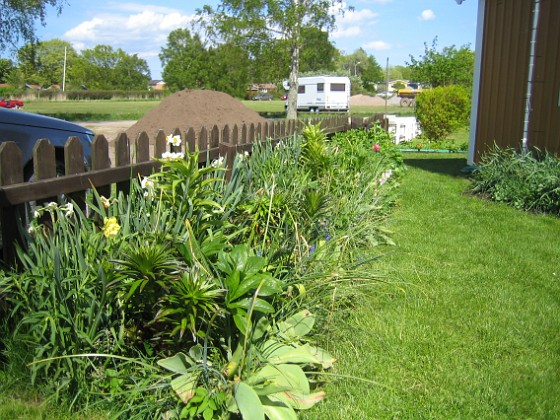 Granudden Bara gröna blad, men observera liljorna i förgrunden.&nbsp 2009-05-21 003 Granudden Färjestaden Öland