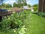 Bara gröna blad, men observera liljorna i förgrunden. (2009-05-21 003)