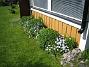 Här är det Blodnäva (de tre gröna 'bollarna'), samt Astrar i bakkant. De vita blommorna är okända skönheter. (2009-05-21 010)