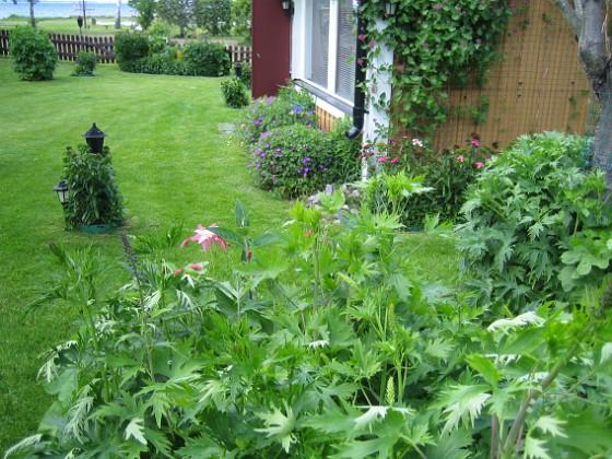 Översikt &nbsp 2009-06-14 072 Granudden Färjestaden Öland