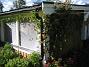 Kaprifol  2009-06-18 074