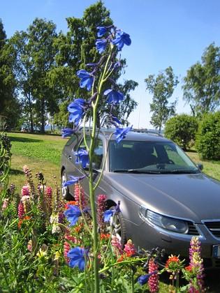 Riddarsporre  2009-06-28 029 Granudden Färjestaden Öland