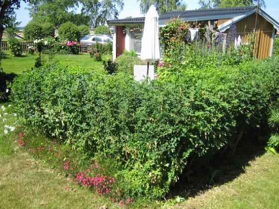 2009-06-28 076 Granudden Färjestaden Öland