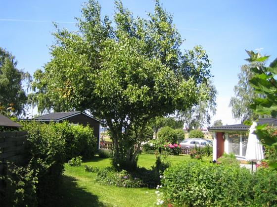 2009-06-28 077 Granudden Färjestaden Öland