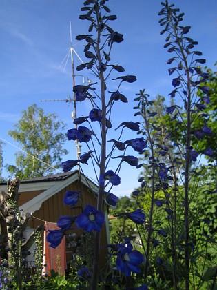 2009-06-28 136 Granudden Färjestaden Öland