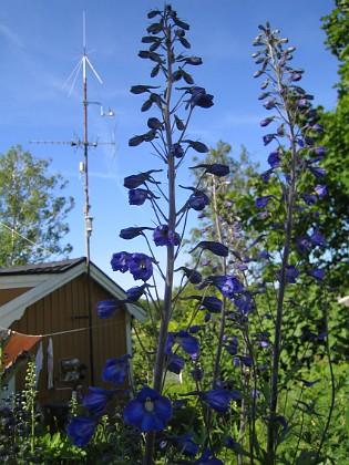 2009-06-28 137 Granudden Färjestaden Öland