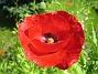 Vallmo  2009-07-02 IMG_0026