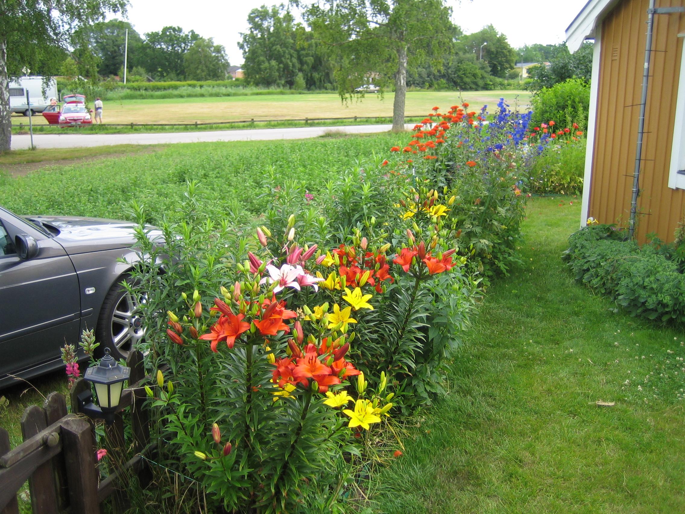 bilder på staket till trädgård