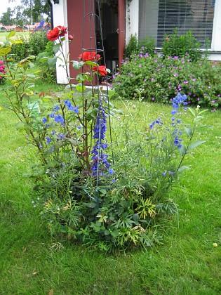 Rosbusken  2009-07-08 IMG_0116 Granudden Färjestaden Öland