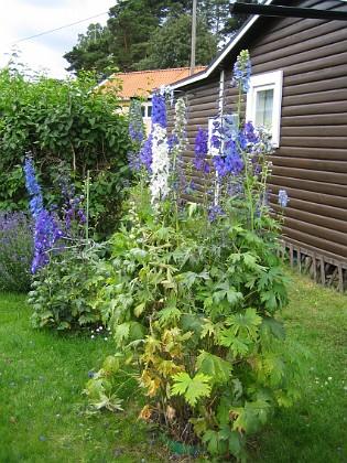 Rundel 3-4-5 Här finns olika sorters Riddarsporrar och i bakgrunden Lavendel. 2009-07-08 IMG_0142 Granudden Färjestaden Öland