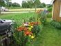 Staket höger Här ser vi Liljorna, sommarens höjdpunkt! 2009-07-08 IMG_0148