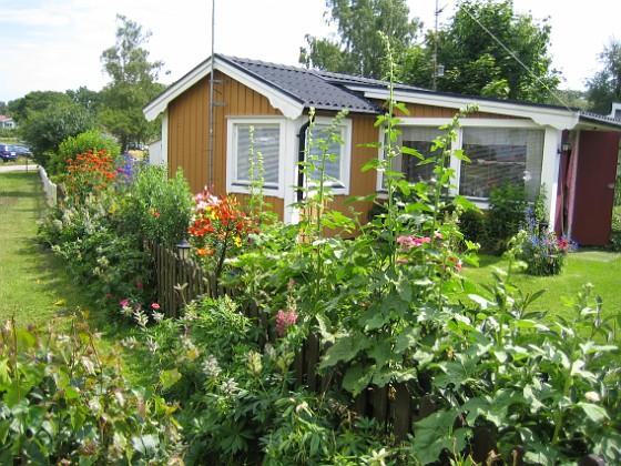 Granudden Det ser lite stökigt ut från utisidan - mina Lupiner har nästan blommat färdigt för året.&nbsp 2009-07-15 IMG_0003 Granudden Färjestaden Öland