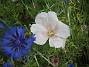 Blått och Vitt  2009-07-15 IMG_0061