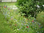 Bakgården  2009-07-15 IMG_0083