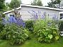 Riddarsporrar  2009-07-15 IMG_0102