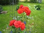 Rosor  2009-07-15 IMG_0116