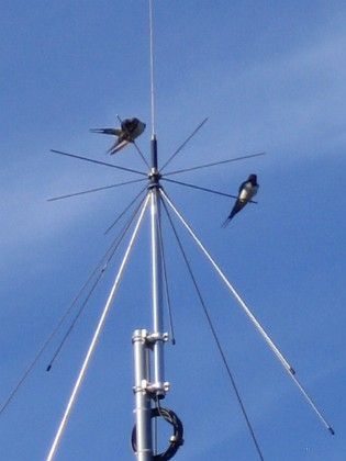 Norra antennmasten Här finns avstämningsenheten till min longwire-antenn, samt min discone för VHF/UHF. Observera två Svalor som vilar på antennen. 2009-07-17 IMG_0176 Granudden Färjestaden Öland