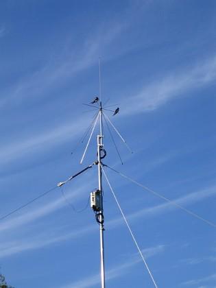 Norra antennmasten Här finns avstämningsenheten till min longwire-antenn, samt min discone för VHF/UHF. Observera två Svalor som vilar på antennen. 2009-07-17 IMG_0177 Granudden Färjestaden Öland