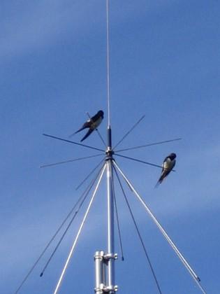 Norra antennmasten Här finns avstämningsenheten till min longwire-antenn, samt min discone för VHF/UHF. Observera två Svalor som vilar på antennen. 2009-07-17 IMG_0178 Granudden Färjestaden Öland