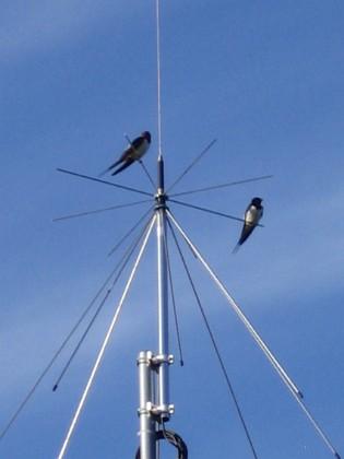 Norra antennmasten Här finns avstämningsenheten till min longwire-antenn, samt min discone för VHF/UHF. Observera två Svalor som vilar på antennen. 2009-07-17 IMG_0179 Granudden Färjestaden Öland