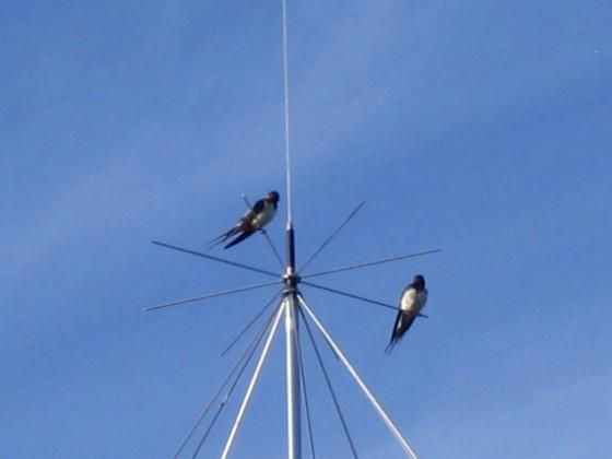 Norra antennmasten Här finns avstämningsenheten till min longwire-antenn, samt min discone för VHF/UHF. Observera två Svalor som vilar på antennen. 2009-07-17 IMG_0181 Granudden Färjestaden Öland