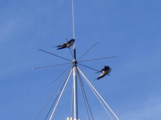 Norra antennmasten Här finns avstämningsenheten till min longwire-antenn, samt min discone för VHF/UHF. Observera två Svalor som vilar på antennen. 2009-07-17 IMG_0182 Granudden Färjestaden Öland