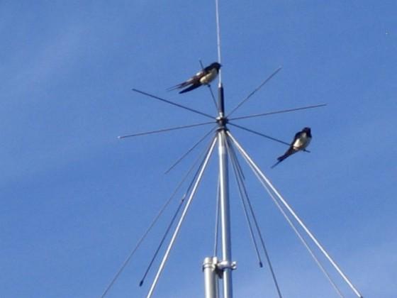 Norra antennmasten Här finns avstämningsenheten till min longwire-antenn, samt min discone för VHF/UHF. Observera två Svalor som vilar på antennen.&nbsp 2009-07-17 IMG_0183 Granudden Färjestaden Öland
