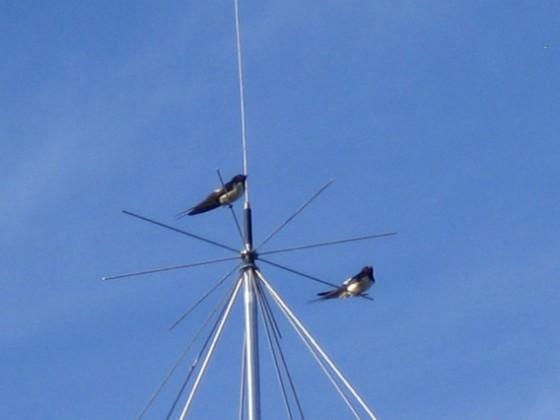 Norra antennmasten Här finns avstämningsenheten till min longwire-antenn, samt min discone för VHF/UHF. Observera två Svalor som vilar på antennen.&nbsp 2009-07-17 IMG_0184 Granudden Färjestaden Öland