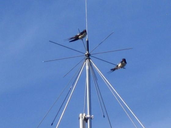 Norra antennmasten Här finns avstämningsenheten till min longwire-antenn, samt min discone för VHF/UHF. Observera två Svalor som vilar på antennen. 2009-07-17 IMG_0185 Granudden Färjestaden Öland