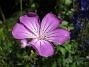 IMG_0103  2009-07-23 IMG_0103
